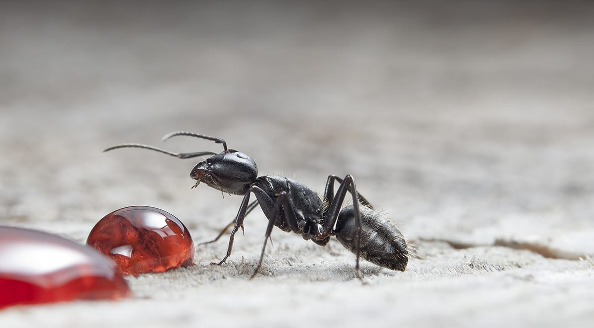 Prevent Ant Invasions