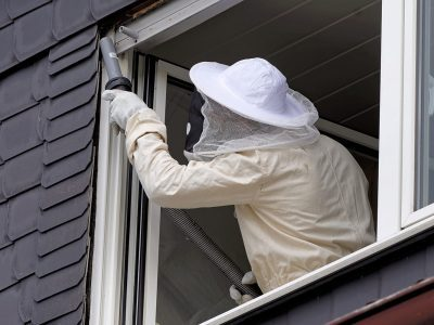 Why Wasps Infest Homes Or Buildings
