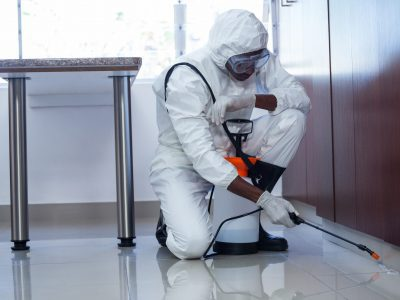 When Is Pest Control Necessary?